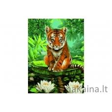 Tapymas pagal skaičius Tigras S052