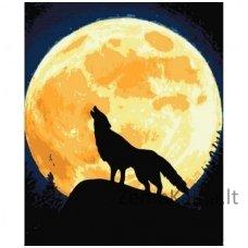 Tapymas pagal skaičius: Vilkas ir mėnulis (50x40cm T50400120)