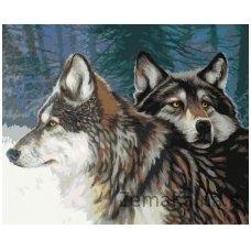 Tapymas pagal skaičius: Vilko žvilgsnis (50x40cm T40500033)