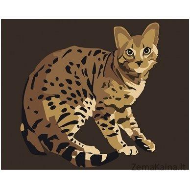 Tapymas pagal skaičius: Bengališka katė (16.5x13 cm T16130064)
