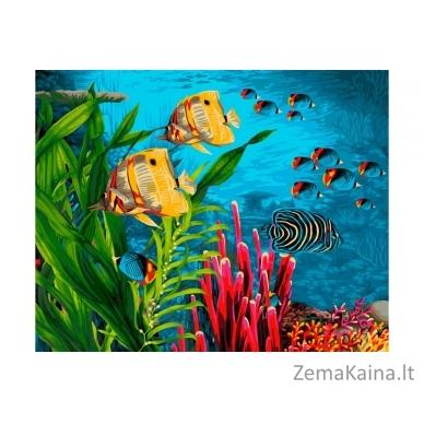 Tapymas pagal skaičius Žuvys  40X50 CM H104